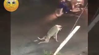 Funny comedy dog