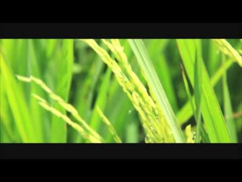 Victory Global Agri- Products Audio Video Presentation
