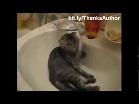 Funny Cats Part 3 - Dec 2012