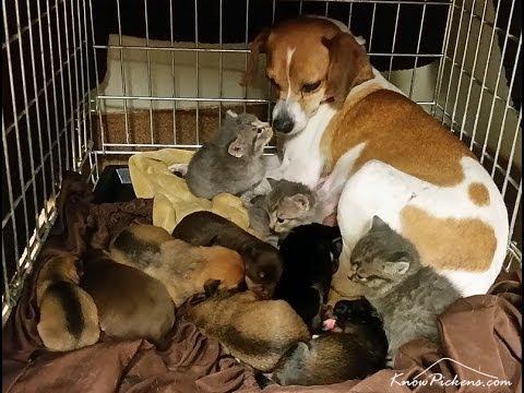 母のいない子猫たちにも愛...