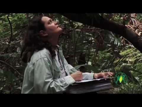 CLP video case study Brazil thumbnail