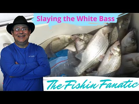 Slaying the White Bass on Lake Livingston, TX