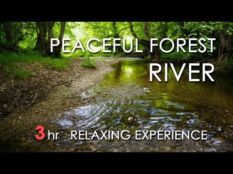 Relaxing River Sounds - Peaceful Forest River - 3 Hours Long - HD 1080p - Nature Video
