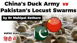China's locust eating duck army to help Pakistan, Is it good way to control locust swarms? #UPSC2020