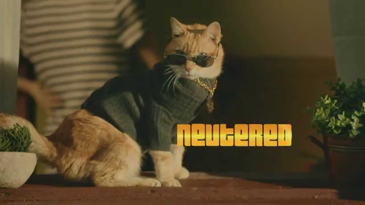 cat lady sweaters