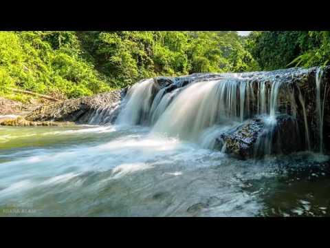 Suara Air Dan Suara Burung Liar Di Alam Untuk Relaksasi