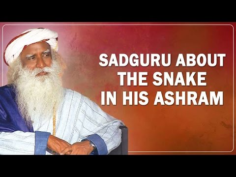 Sadhguru Jaggi Vasudev about he significance of the Snake in his Ashram | Sadguru Quotes