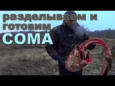 Как готовить сома - видео