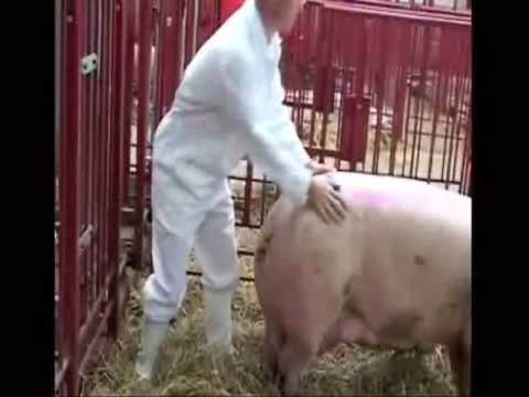 Swine Flu actually came from Danish farmers