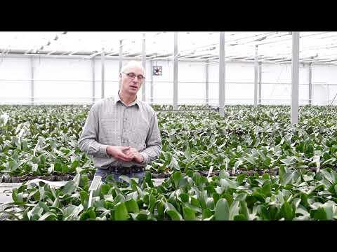 Welche Krankheiten gibt es bei Orchideen Gärtner gibt Profitipps Teil 1