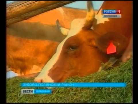 В Мордовии разработали уникальный корм для крупного рогатого скота