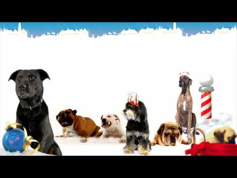 The 12 Dogs of Christmas - Singing Live from the North Pole