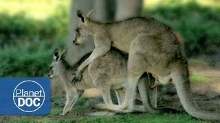 Relationship & Animal Mating | Sexual Conflict - Documentary