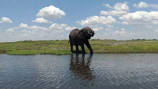 The Land of the Giants- Elephants of Chobe National Park