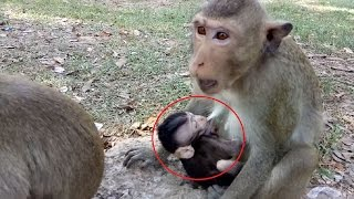 Why Small Monkey Have Baby? Look Baby So Sad ST107