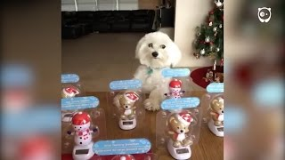 首がフリフリ揺れるおもちゃと一緒にシュールに踊る犬!?