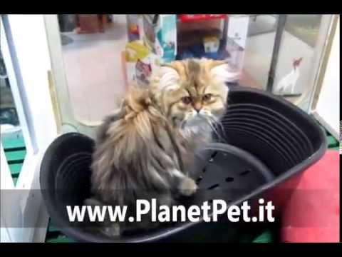 Persiano – www.PlanetPet.it