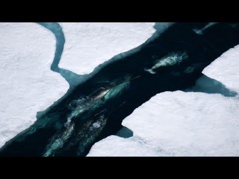 【地球:奇蹟的一天】幕後花絮:獨角鯨破冰而出篇