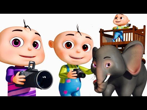 Zool Babies Wild Life Photography Episode (Single) | Videogyan Kids Shows | Cartoon Animation