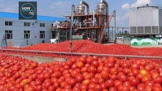 How Tomato Ketchup Is Made | How To