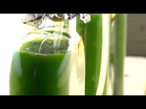 Algae to Fuels