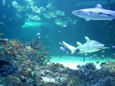 The Carnival of the Animals - Aquarium