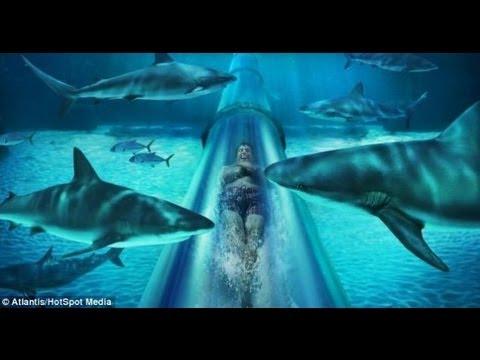 Atravesando tiburones aquaventure tobogan maya las for El hotel que esta debajo del agua