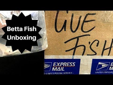 UNBOXING MY $100 PURE WHITE BETTA FISH