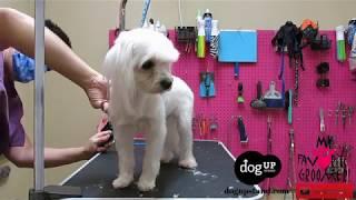 Dog Groomers Dont Do Their Job