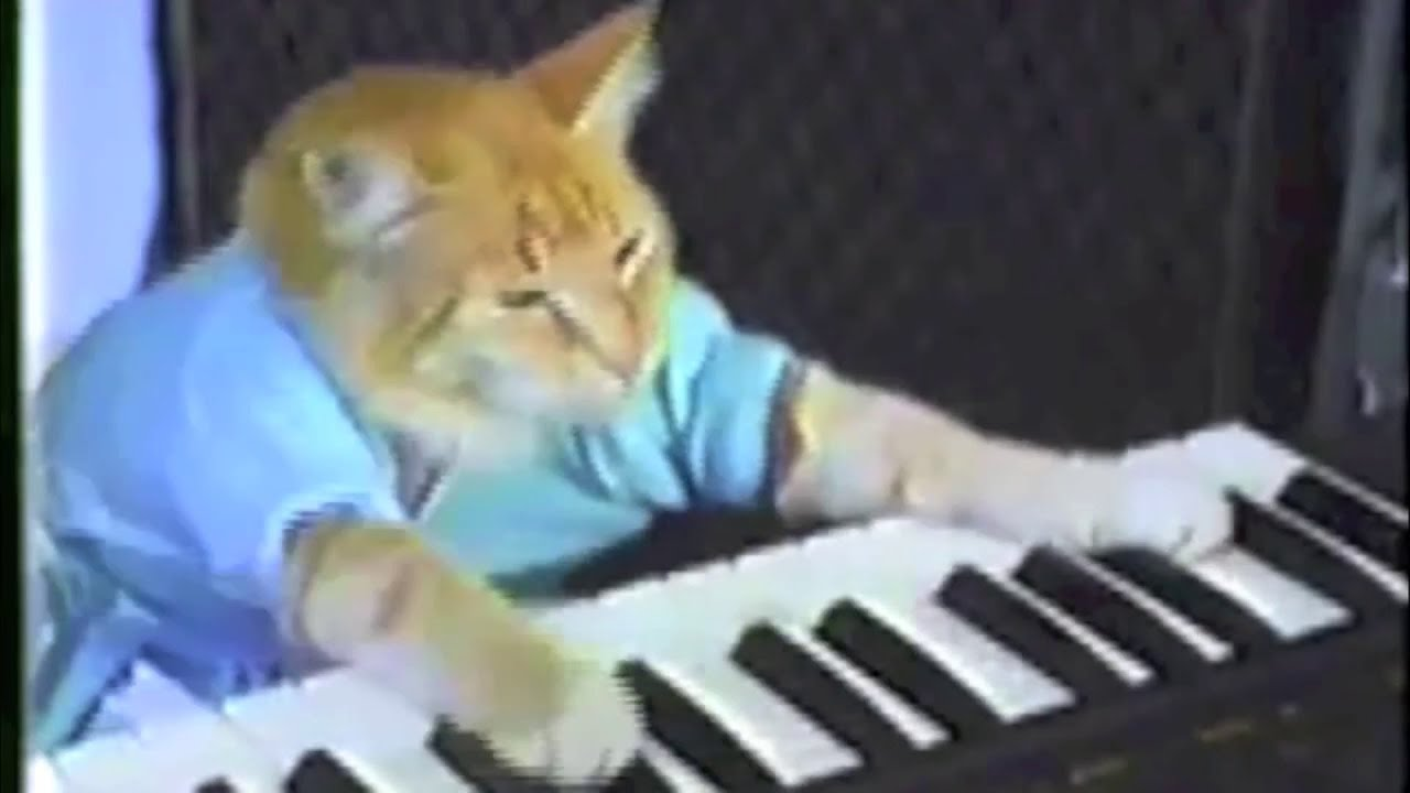 The Funniest Cat Videos Ever In The World
