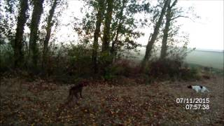 chasse perdreaux pointer braque