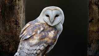 Owl as a Totem: Your Personal Power Animal's Personality Characteristics and Life-Path Lessons