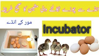 incubetr home tisting peacock egg  by mix All about in hindi/urdu