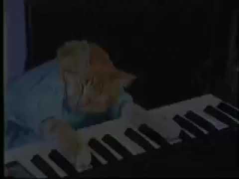 Charlie Schmidt's Keyboard Cat! - THE ORIGINAL!