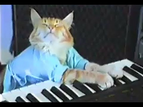 Charlie Schmidt's Keyboard Cat! - THE ORIGINAL! tab