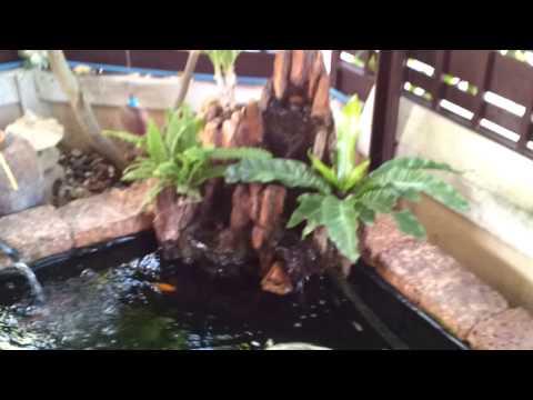 บ่อปลาคาร์ฟคราฟฟสร้างเอง fish pond.mp4