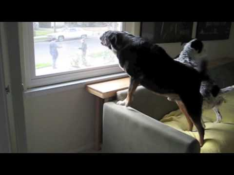 how to stop my dog from barking at visitors