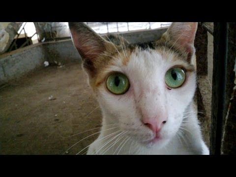 Best cutest cat with very beautiful eyes | India | 2014 [HD VIDEO]
