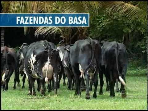 Basa_Leilao_2010.wmv