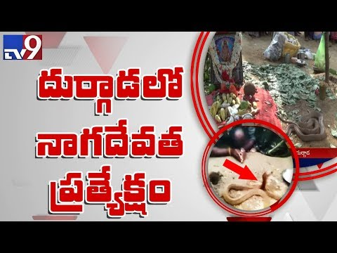 Cobra : An avatar of God? - TV9 Exclusive