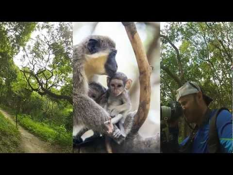 Bijilo Forest Park: I Found Monkeys! - Day 12