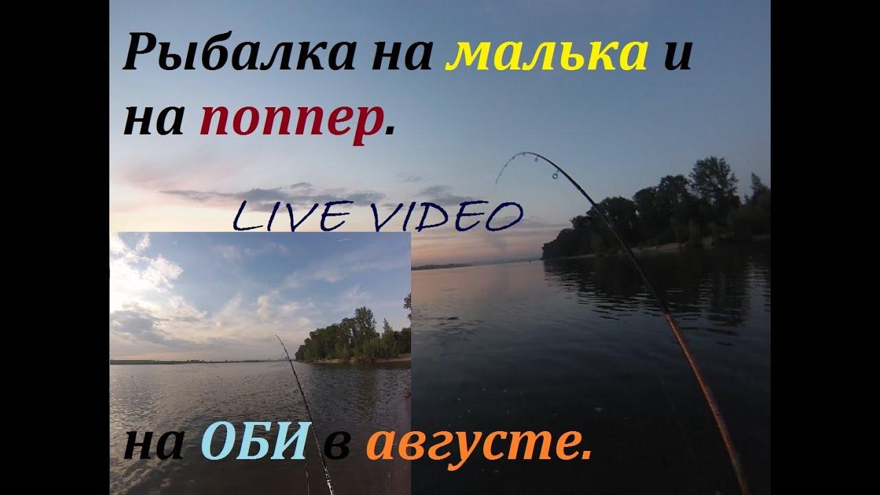 ловля судака на оби видео: