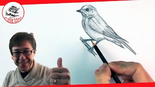How to Draw a Bird step by step with Pencil (complete drawing session little accelerated)