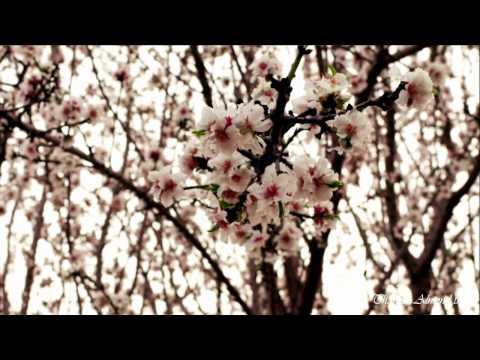 Lucas Thanos ~ Almond tree (Kostas Karyotakis)