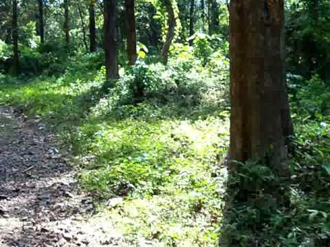 Salim Ali Bird Sanctuary Kerala dr Salim Ali Bird Sanctuary