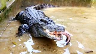 Nơi ở mới của cá sấu, đi câu cá và con rắn lạ (Phần 3) | Crocodile's new home (part3)