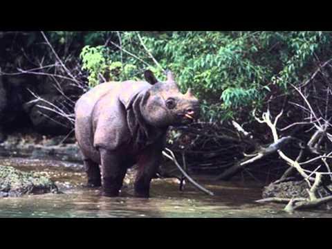 Chung tay hành động vì động vật hoang dã