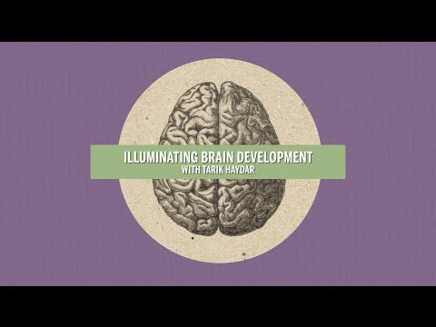 Illuminating Brain Development