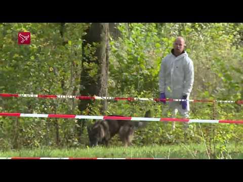 NFI en speurhonden zoeken naar Anne Faber