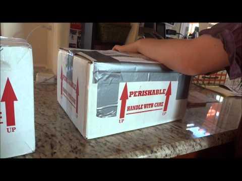 Receiving HUGE Reptile Shipment!